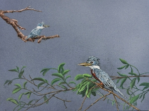 Ringed Kingfishers
